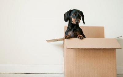 The Top 10 Reasons Homeowners Consider Moving Home…